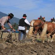 Concours régional Trait Comtois sept 2010