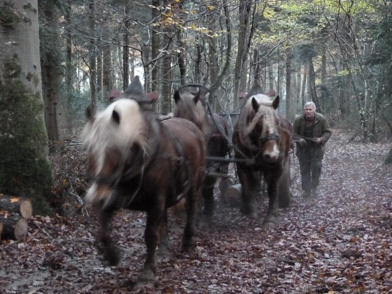 Débardage dans la forêt de Besançon le 18.11.2014
