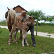 Quinine et sa pouliche 3h après sa naissance 28.05.2013
