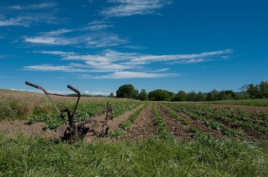Buttage des patates 24 05 2014 002